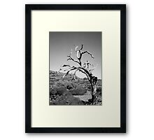 Ancient Tree Framed Print