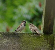 Sparrow Family by BugHunter