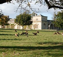 More Deer, and The Stable Block by dougie1page2