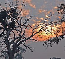 Bushfire Sky by Harry Oldmeadow