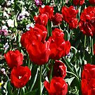 Tip-Toe through the Tulips by Jason Scott