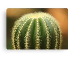 Green Cactus! Canvas Print