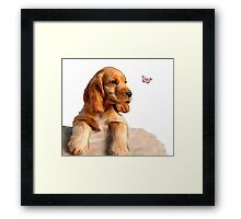 Cocker spaniel puppy & butterfly Framed Print