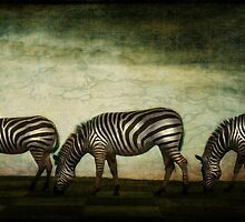 Zebra Herd  with dark sky by dizzyajc