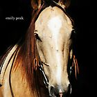 Bucky the Ranch Horse by Emily Peak