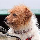 Wet Terrier by Paul Holman