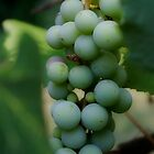 On the Vine by bcollie