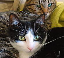My Cats Penny and Baby by Tony Ramos