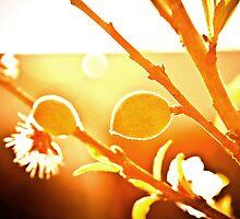 Peaches -n- Dreams by Guy Hoffman (aka creative365)