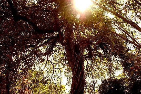 Floridian Jungle  by CarolinehbFL