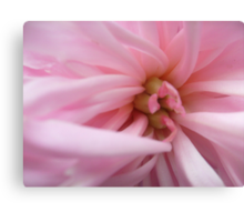 The soft color peony Canvas Print