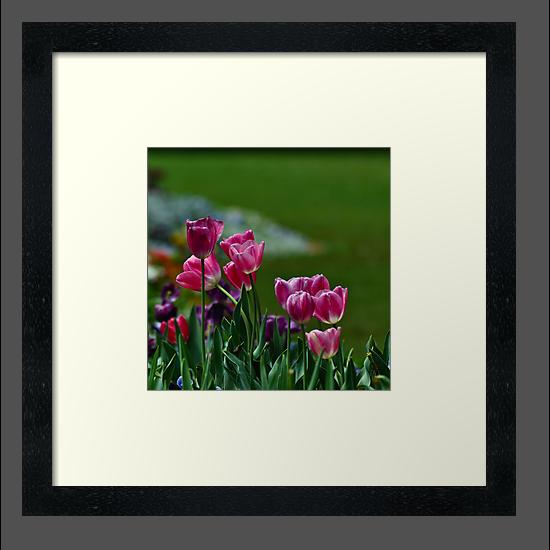 tulips ii by gary roberts