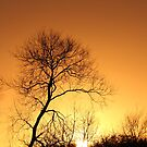 Silhouette of a Tree set in a Winter Sunset by Paul Bettison