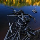Autumn Driftwood, Rosemont Reservoir, CO 2010 by J.D. Grubb