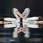 Australian Pelicans by John Harrison
