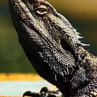"""""""Look Sharp"""" Lizard sunning on log - Stanthorpe - QLD by Ohlordi"""