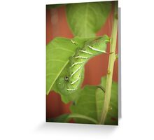 Tomato Worm and Baby Greeting Card