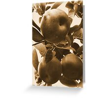 Apples in Sepia Greeting Card