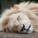wake up sleepy head! by wendywoo1972