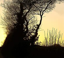 Little Haldon Sunset, Teignmouth  by Mike  Waldron