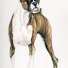 Brindle Boxer by Charlotte Yealey