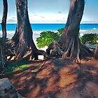 Maui HI,Hanna,Hamoa Beach, Bay Window by photosbyflood
