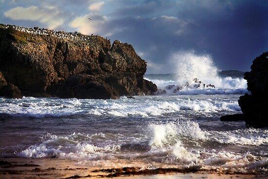 ~ Storm ~ by Lynda Heins