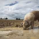 Mud pool with pig by photontrappist