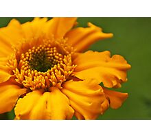 Orangey Photographic Print