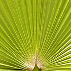 Green palm leaf by Linn Arvidsson