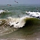 Gulls feed off the debris stirred  up by breaking waves by GBR309