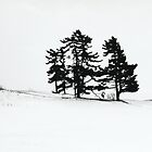 Trees, Field, Snow...Fenelon Falls 2010 by Ken Hill