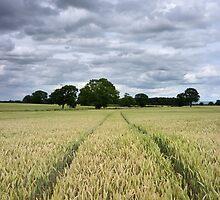 Fields Near York by Mat Robinson