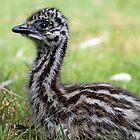 Emu chick by Bronwyn Munro
