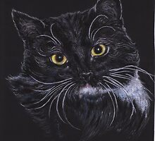 Oreo the Cat by Pam Humbargar