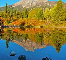 Fall Reflections Jenny Lake area by Luann wilslef