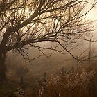 Tree in Morning Fog Three, Australia by Phill Danze