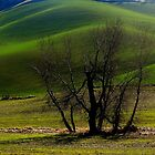 Hills in Green by Stacy Colean