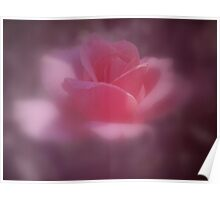 Softly the Pink Rose Poster
