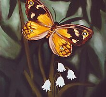 common brown -butterfly by maria paterson