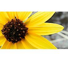 Yellow, Like The Sun Photographic Print