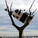 Cow in tree by John Dalkin