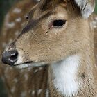 DOE by Debbie Ashe