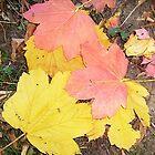 Leaves by Ana Belaj