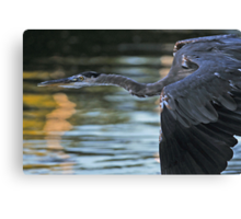 Roaming in the Gloaming Canvas Print