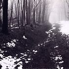 Thaw at Mono Cliff's...Bruce Trail by Ken Hill
