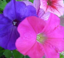 Pretty Petunias by Marsha Free