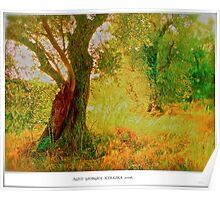 Agios Giorgios . Kerkira . Greece . 2006. by Brown Sugar . Favorites: 5 Views: 532 . THANKS WITH WAAAAWS !!!!! Poster