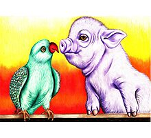Pig 'n' Parrot Photographic Print
