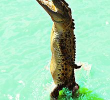 Jumping Crocodile by Julia Harwood